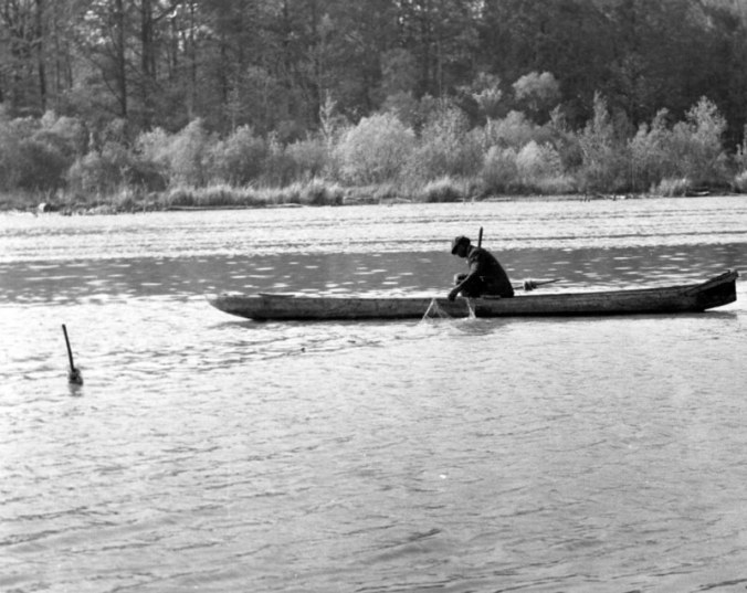 Herring fisherman in a cypress dugout, Roanoke River, probably near Plymouth, N.C., ca. 1937-39. When it came to herring, there was a niche for just about everybody: lone fishermen from Plymouth's black neighborhoods, for instance, built their own dugouts and drifted netted for herring, then sold them door-to-door. Photo by Charles A. Farrell. Courtesy, State Archives of North Carolina