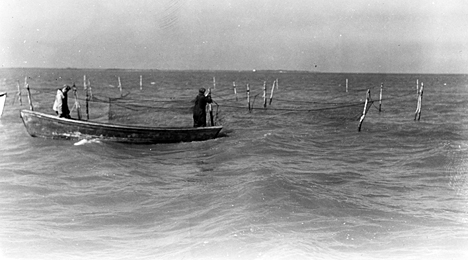 Fishermen tending pound nets near Wanchese, N.C., ca. 1939. Photo by Charles A. Farrell. Courtesy, State Archives of North Carolina
