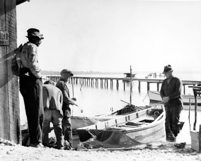 """Ginny Richardson's father, Lester """"Son"""" Midgette, is the fisherman on the far right. He and the other men are """"boatin' the net""""-- loading the net back on their skiffs after emptying it of fish at the fish house. Ginny has very fond memories of her dad. She told me that he never sent to school even for a year, but taught himself to read and read widely, everything from the Bible to history. He was a fisherman, but in hard times he and the family would """"work around""""-- picking green beans for Mr. Joe Justice, cropping tobacco, hoeing corn, etc. """"We were poor as church mice,"""" Ginny recollected.""""We never really went hungry,"""" she said, but she made it sound like they got close. She recalled how, when her dad got pneumonia and couldn't work, she and her 4 brothers-- all of them young children-- would harvest oysters so they'd have something to eat. She identified the man on the far right as Sol Ennett, and the fisherman at the other end of the net as Tobe, or Toby, Shephard. Photo by Charles A. Farrell. Courtesy, State Archives of North Carolina"""