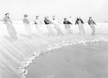 """Bringing a small haul of mullet onto the beach. In the distance, we can see """"Old Baldy,"""" the Bald Island Island Lighthouse, built in 1817 to mark the entrance to the Cape Fear River. The federal government ceased to operate the lighthouse in 1935. Photo by Charles A. Farrell. Courtesy, State Archives of North Carolina"""