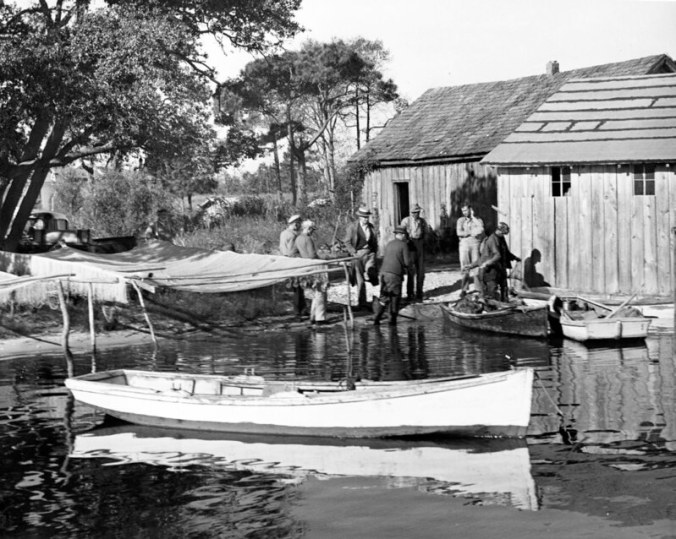 Ms. Ginny believed this was a side view of one of the local fish house, probably Andrew Canady's. Her father is the back in the center of the group of men with his back to us. Her grandfather, Louis Midgette, stands just to the right of him. To the left, we can see a gill net drying on a net rack beneath a large live oak tree. Photo by Charles A. Farrell. Courtesy, State Archives of North Carolina