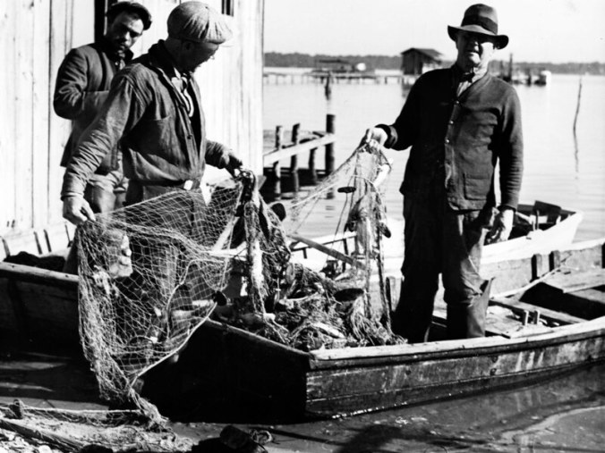 """Ginny remembered her father, Lester """"Son"""" Midgette (on right), as funny, always joking, gentle and humble. He often worked all night on the river. He mostly fished gill nets, but also floundered. When he went floundering, she recalled, he hung a wire basket filled with lightwood knot not he side of his skiff's stern to light the bottom. """"Next morning they'd look like raccoons because of the smoke,"""" she told me, laughing at the memory. She said he usually sold his catch at Jim Fulcher's store or at Andrew Canady's store, also in Sneads Ferry. In the fall, she remembered him chasing roe mullet up the New River and staying a week, camping on the bank, and selling his catch in Jacksonville, the county seat. Photo by Charles A. Farrell. Courtesy, State Archives of North Carolina"""