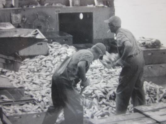 A big haul on one of the Whitehurst Fishery's boats, Lake Erie, ca. 1930s. Courtesy, Giles Willis, Jr.
